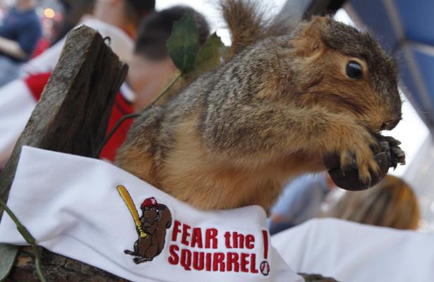 roundtable_squirrel.jpg