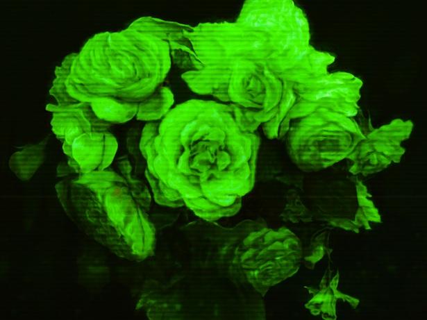 sheller copying flowers 615.jpg