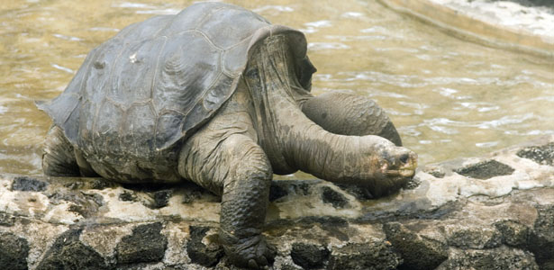 smith_lonesomegeorge_post.jpg