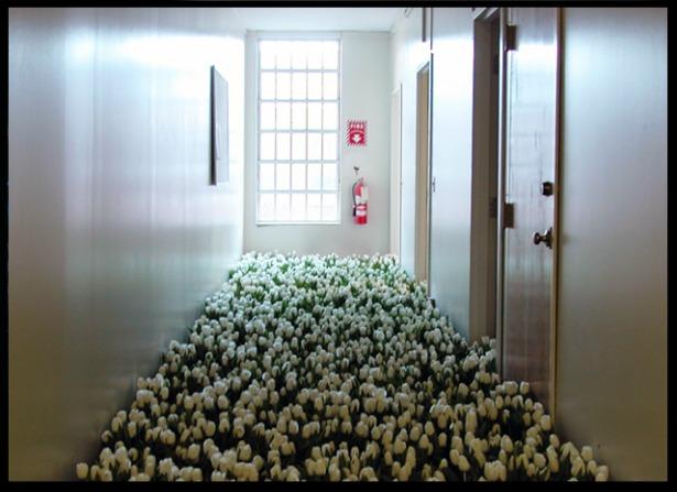 2BLOOM-by-Anna-Schuleit-White-Tulips.jpg
