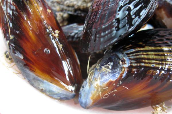8_mussels.jpg