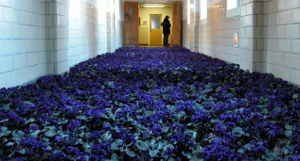 BLOOM-by-Anna-Schuleit-Blue-Hallway-main.jpg