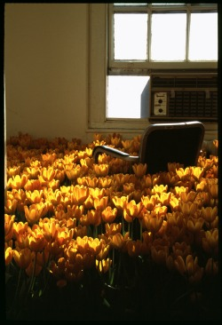 BLOOM-by-Anna-Schuleit-Tiny-Office-with-Tulips-inset.jpg
