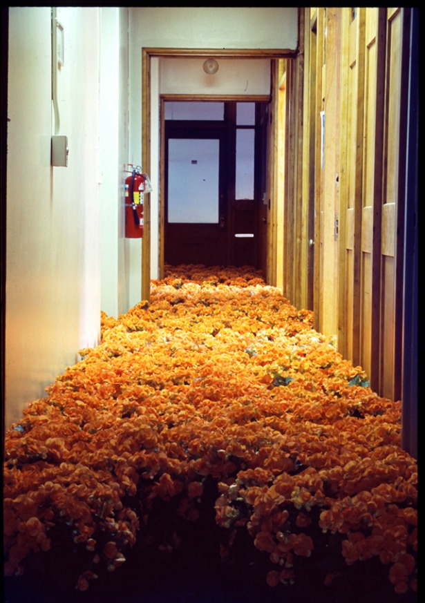 BLOOM-by-Anna-Schuleit-orange-begonias.jpg