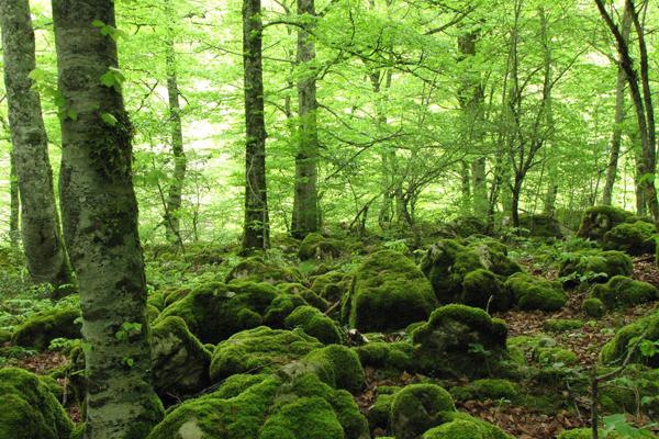 SS11 schmitt may24 forest.JPG
