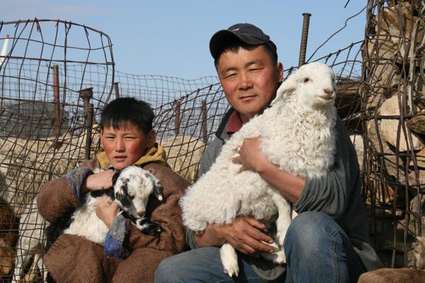 SS4 parks may21 sheep.jpg