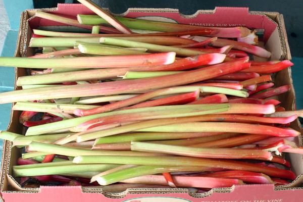 SS5 sayle rhubarb.jpg