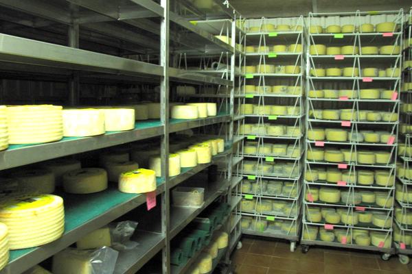 SS7 schmitt may24 cheeseroom.JPG