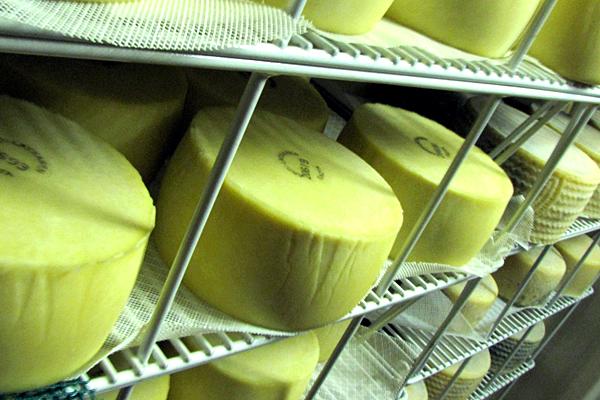 SS8 schmitt may24 cheese.JPG