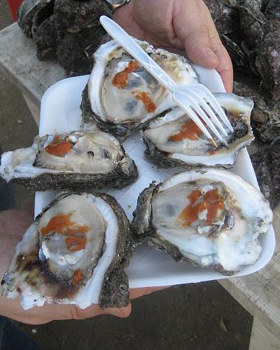 Sally_oysters_cut.jpg