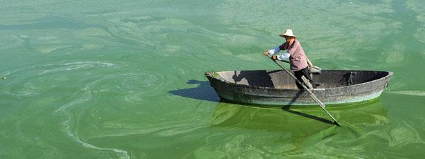 algae-615.jpg