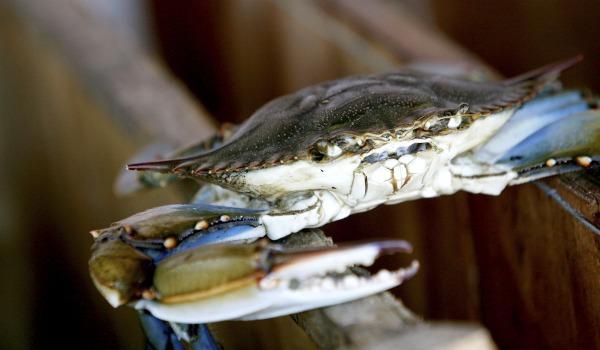 crab_wide.jpg