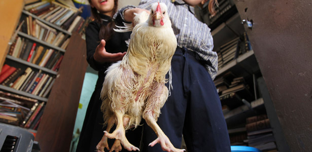 ChickenPic-Reuters-Post.jpg