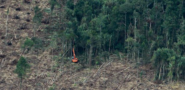 ClearingTrees-Reuters-Post.jpg