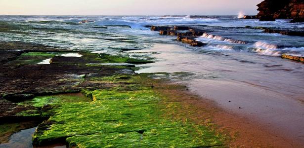 SeaweedSS-Post.jpg