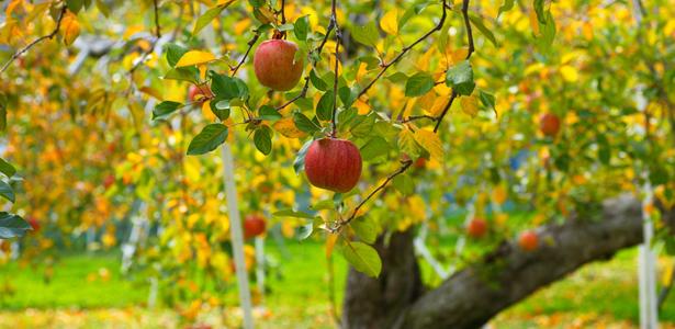 FruitTrees-SS-Post.jpg
