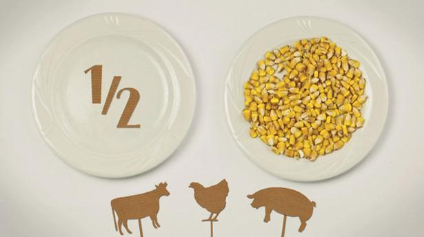 3-foodrules4.jpg