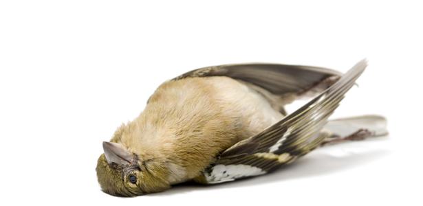 BirdFluSS-Post.jpg