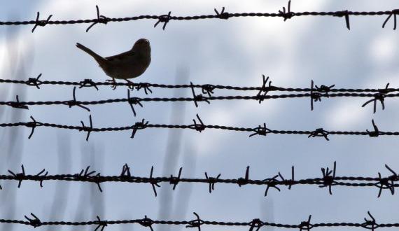 bird on wire 570.jpg
