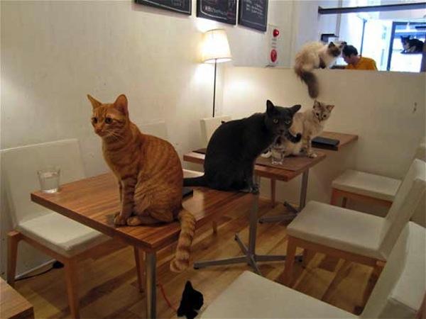 cat-cafe.jpeg