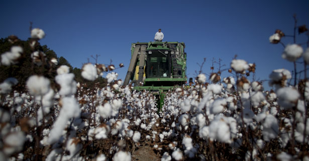cottonban.jpg