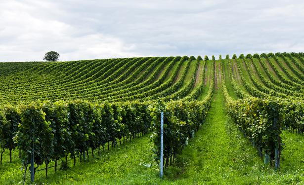 crops-615.jpg