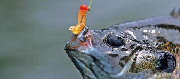 fishoilmain.jpg