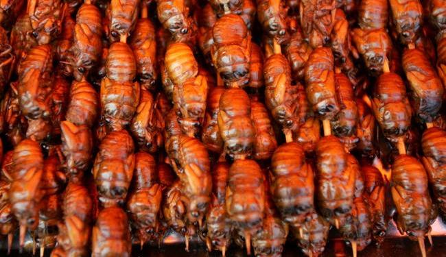 fried cicadas main getty.jpg