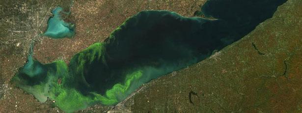 image003-algae2.jpg