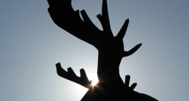 moose cleanse 615 main.jpg