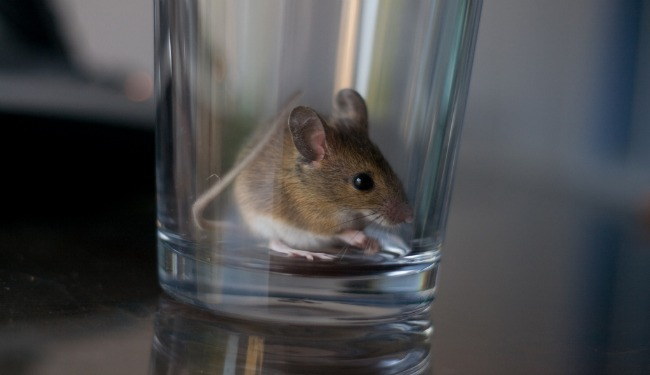 mouse in glass main.jpg