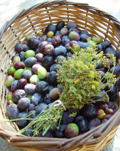 olives_basket_cut.jpg