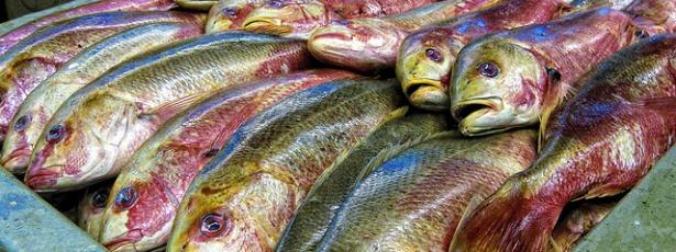 rainbowfish615.jpg