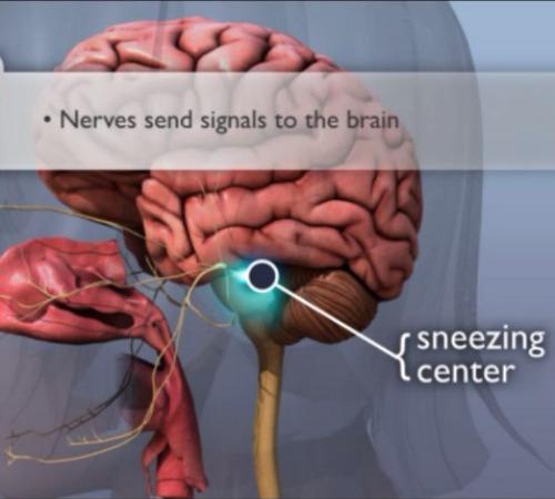 sneezing center2.jpg