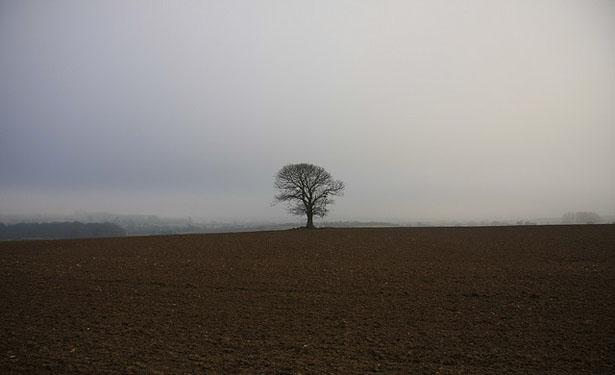 tree-615.jpg