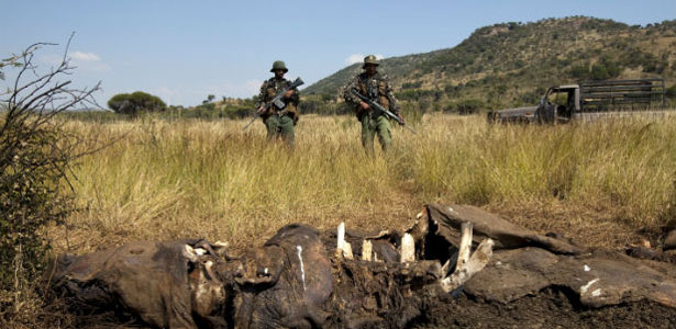 Africa-wildlife-poaching-07172012.jpg