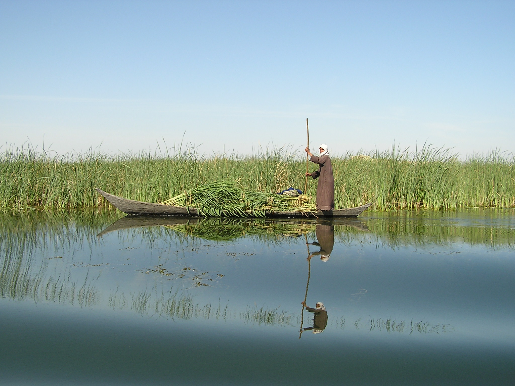 Against_the_mirror_in_the_Iraq_Marshes._Mudhafar_Salim,_Nature_Iraq.JPG