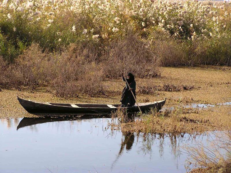 Basra_Marshes_Mudhafer_Salim,_Nature_Iraq.jpg