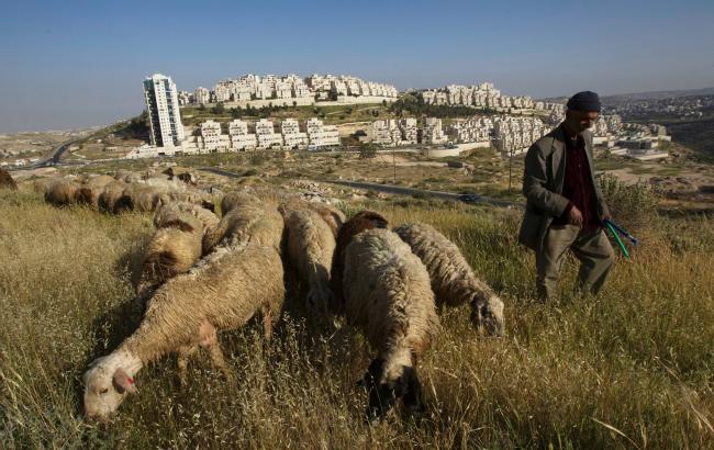 Har homa sheep banner.png
