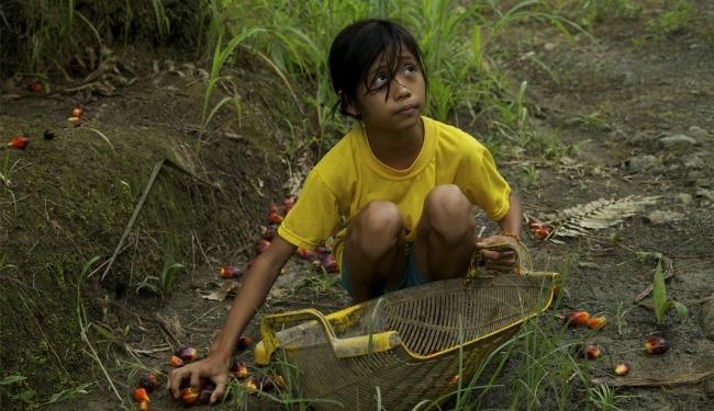 Palm oil aritcle banner 2.jpg