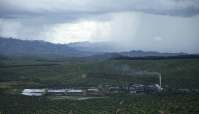 Palm oil article banner.jpg
