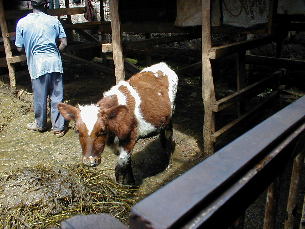 Photo_Urban Livestock_4.png