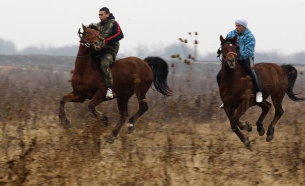 horsepiphany2.jpg