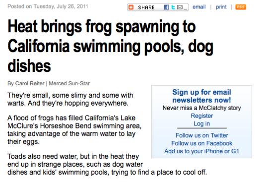 FrogNews.png