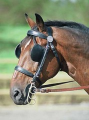 Horse_with_blinders_small.jpg