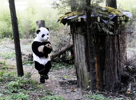 PandaHunt.jpg