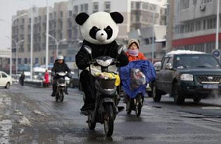 PandaOnBike.jpg