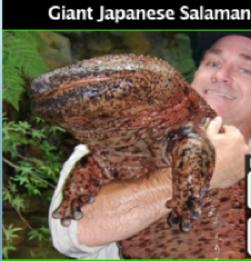 Salamanders.png