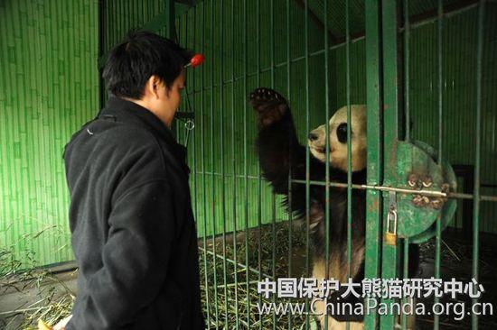 panda_1267500713.jpg