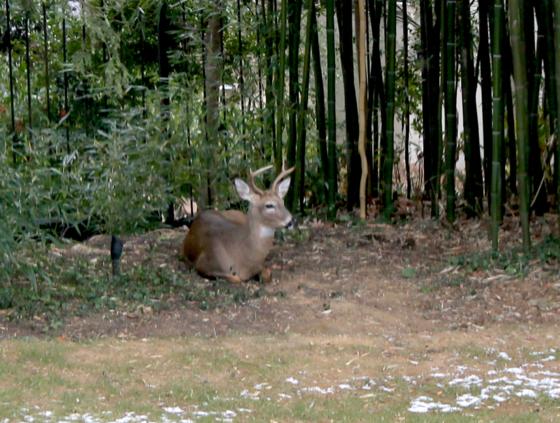 Thumbnail image for Deer2010.png